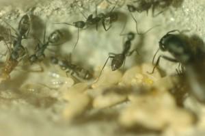 antfamily