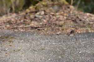 左手前にトゲアリがいます
