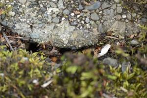 道端の裂け目に巣があった