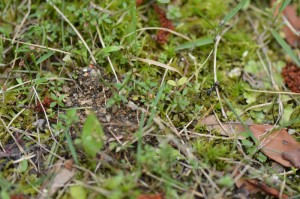 左側に盛り土が見られる