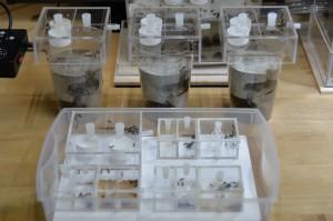寄生に成功したトゲアリ(一番背後の中型のコンクリート製人工巣は含みません)