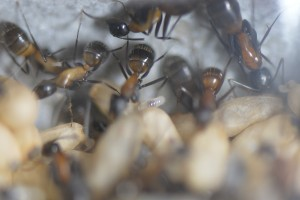 1025 中央に小さな幼虫が1匹見える