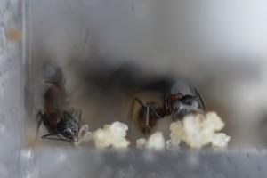 1028 左端に幼虫が1匹見える