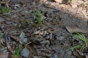 たくさんの羽アリが地上に出ている