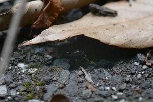 落ち葉の陰で休憩 9月8日12時23分撮影