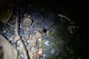 識別成分塗布が行われていた場所 クロオオアリの巣口がある 9月17日6時5分撮影
