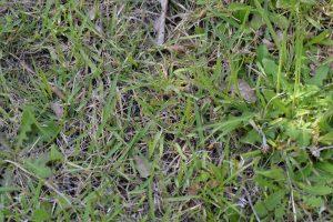 芝等で巣口が覆われている