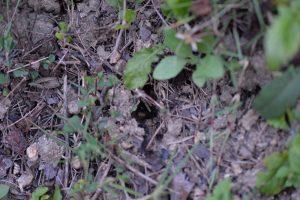 賑やかだった巣口周辺だが、この時には羽アリの姿がなかった 19時04分撮影