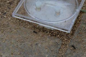 SIMSMA01057 外部への出入り口等を塞ぐ(狭くする)ため、土を人工巣へと運び込んでいる