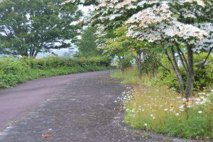 花が咲く自転車道