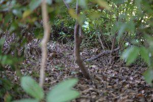 林の茂みの中へ入っていった