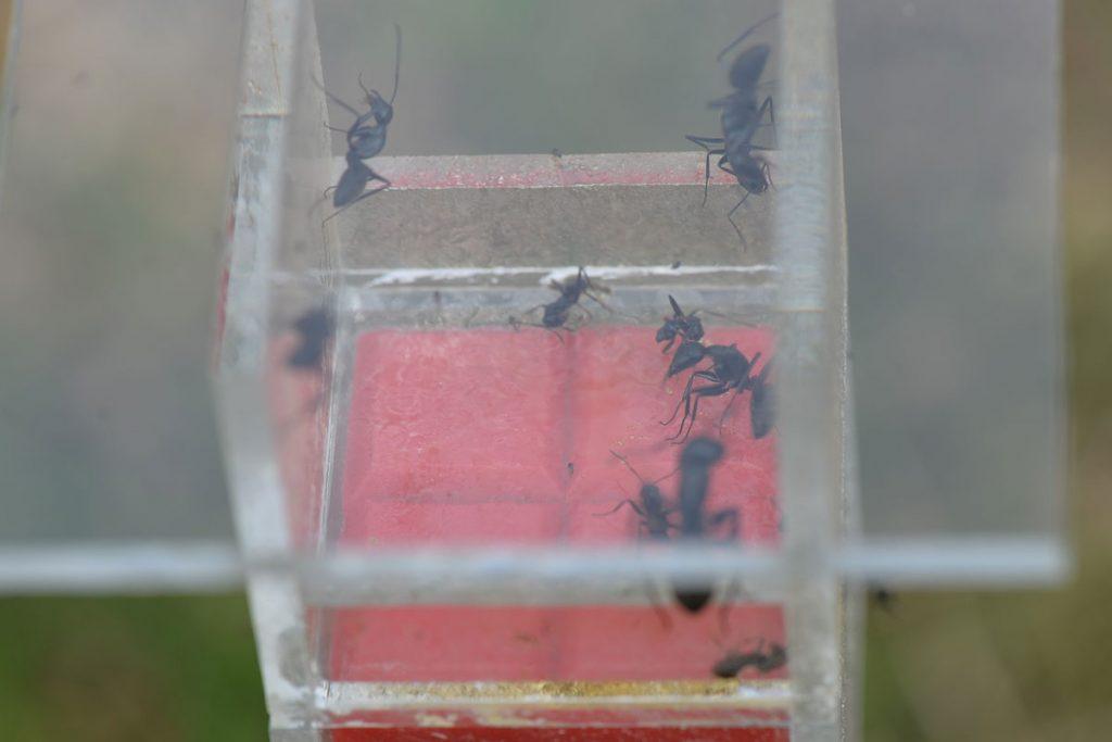 10時38分撮影 30分も経たない内に5mLの蜜が飲み干された