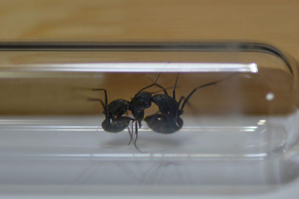 B巣とD巣の働きアリ