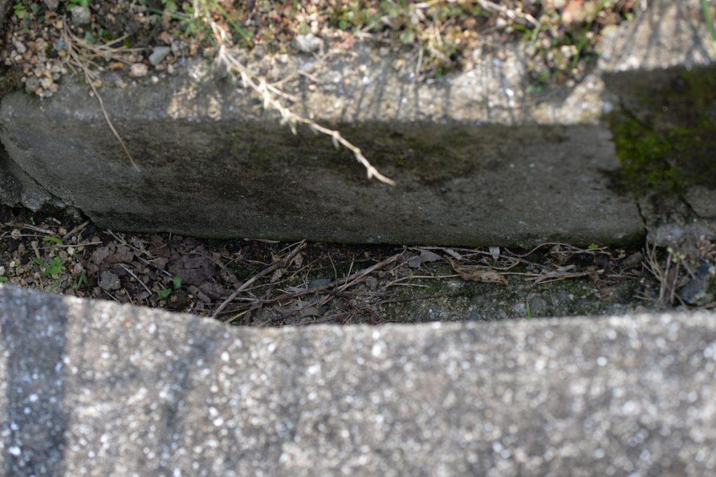 溝の底面と側面の境目のすき間に巣の出入り口があるようだ