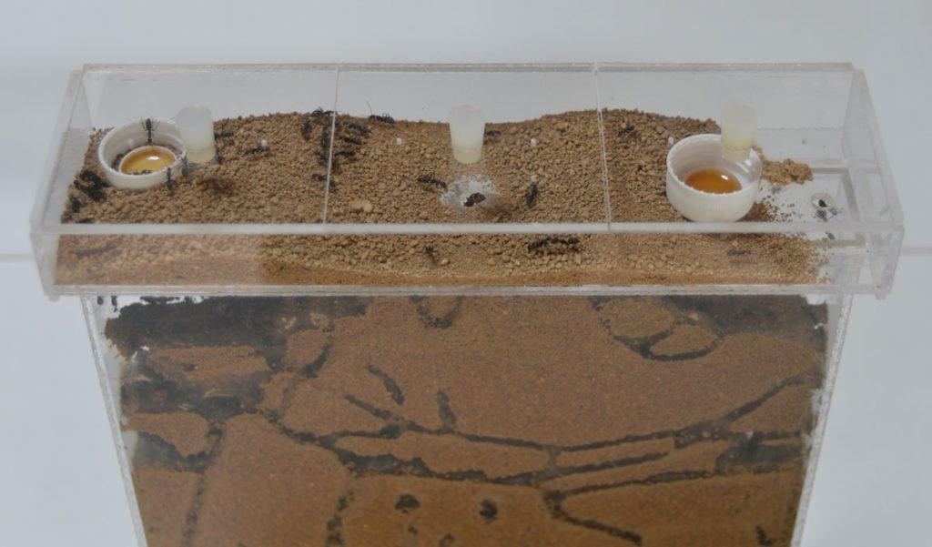 活動室の様子 運び出された土は良く乾燥している